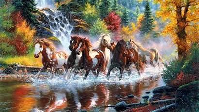 Horses Wild Wallpapers Desktop