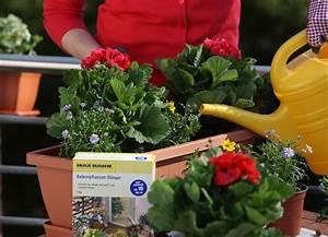 Künstliche Blumen Für Balkonkästen : blumenkasten auf dem balkon pflanzen s en pikieren ~ A.2002-acura-tl-radio.info Haus und Dekorationen