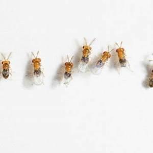 Manger Des Mites Alimentaires : antiparasitaire tricho mite pour les mites dans la ~ Mglfilm.com Idées de Décoration