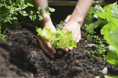 planting a garden gardening by the moon s sign dates april 2016 farmer