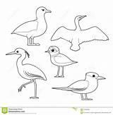Cormorant Cartoon Coloring Bird Albatross Tern Egret Plover African sketch template