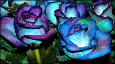 Hd Blue Flower Wallpapers