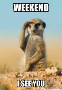 Happy Weekend Meme - weekend meerkat