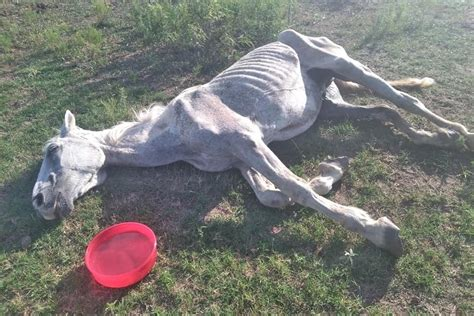 horse animal emaciated cruelty die texas died leaving laws county considered why wasn bastrop livestock penalties include treatment liz carrasco