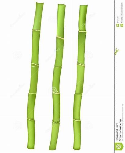 Bamboo Clipart Sticks Stick Stalks Vector Illustration