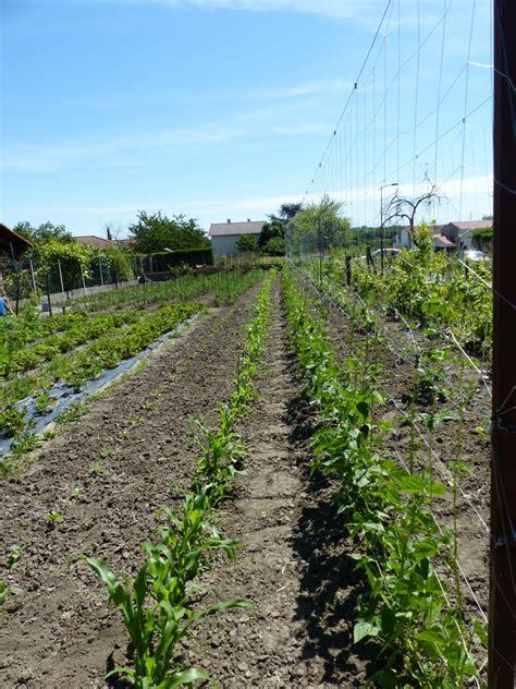 cuisiner betterave crue betterave 1 kg les jardins auvergnat locavor fr