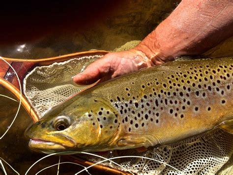 joe penich jps specialty nymphs tying fishing strategies