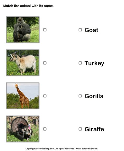 animals  pictures worksheet turtle diary