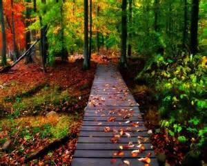 Autumn Road Desktop Backgrounds