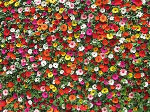 Mur De Fleurs : mur de fleurs ~ Farleysfitness.com Idées de Décoration