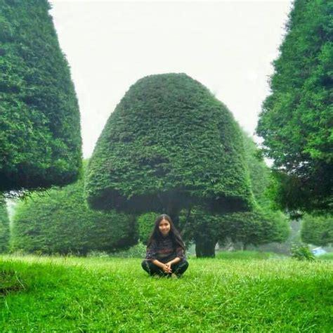 bukit jamur rancabolang ciwidey bandung tempat wisata