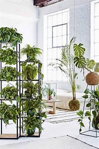 19, Of, The, Best, Indoor, Plants