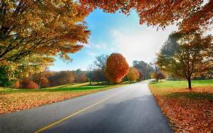 Country road in the fall wallpaper