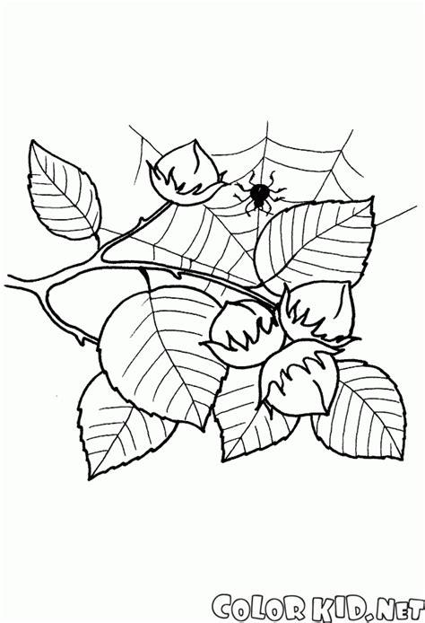 disegni da colorare foglie  frutti