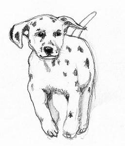 Dog sketches - Pencil drawings of dogs