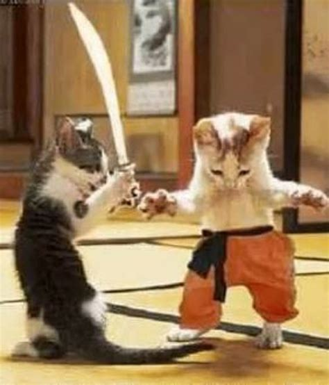 Ninja Catslatest Funny Video [video]