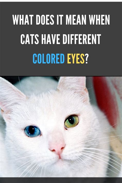 eyes cats different colored mean cat does facts why they kittens means