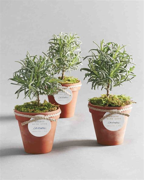Flower And Plant Wedding Favor Ideas Topiary