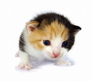 L allevamento dei gattini orfani