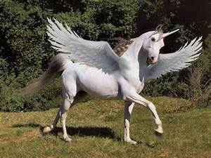 A REAL PEGASUS?! X3 by SoloCrimson on DeviantArt