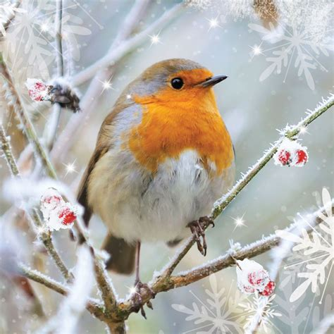 robin winter google search winter pinterest robins