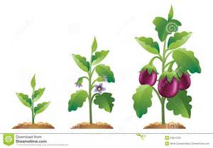 Clip Art of Plant Growth Stages
