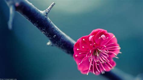 Blumen Desktop-hintergrund Hd