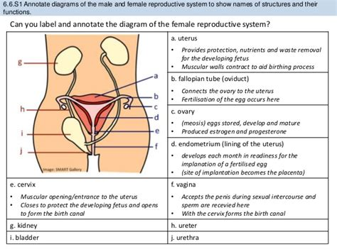 reproductive hormones chart form anatomy labelled