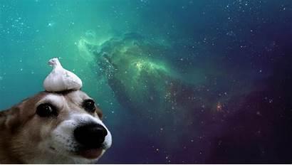 Dog Space Computer Wallpapers Desktop Backgrounds Px