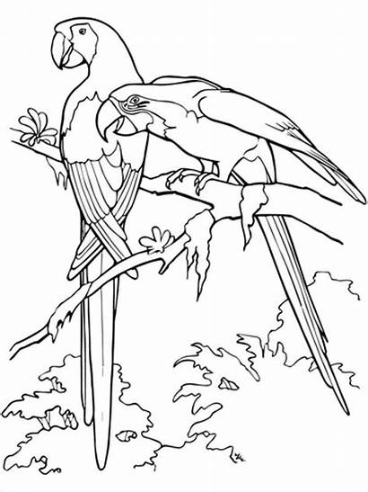 Coloring Pages Adults Adult Bird Templates Template