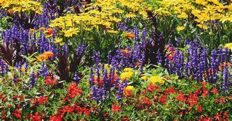 annual  perennial  biennial  plant types