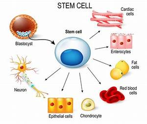 How To Explain Stem Cells To Children