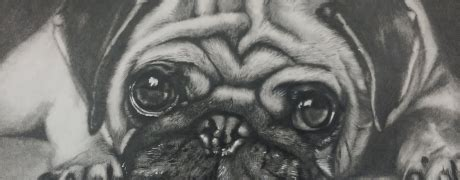 drawing workshop realistic animals ages  bring