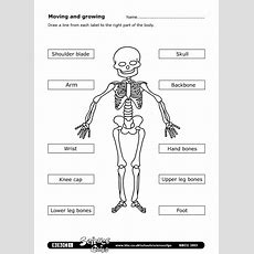 Bbc  Schools Science Clips  Moving And Growing Worksheet