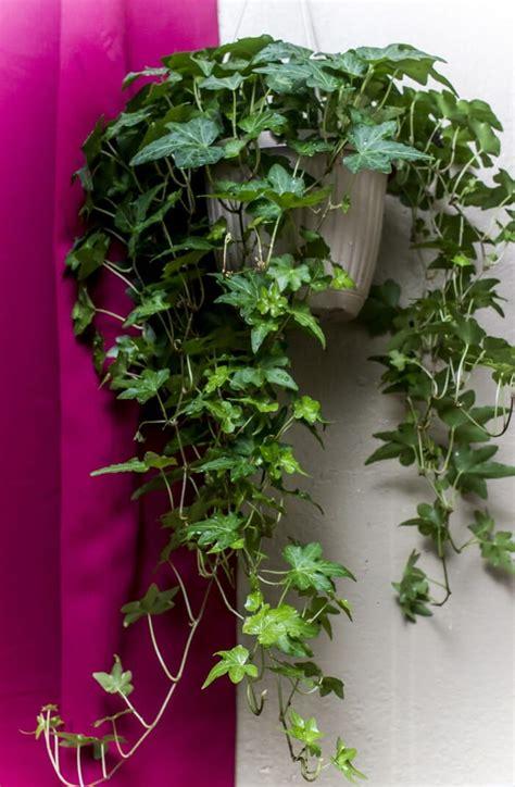 nasa forschung offenbart diese  pflanzen machen die