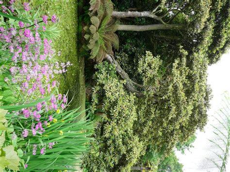 verloren tuinen van heligan ebooks tropische tuinen bij de verloren tuinen van heligan stock