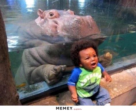 scared memes funny scared pictures memeycom