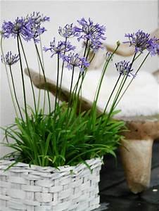 Bulbes D été : bulbes d 39 t pour enchanter votre jardin ~ Melissatoandfro.com Idées de Décoration
