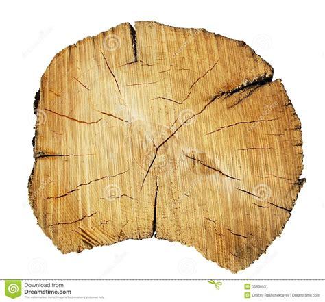 tree trunk cut stock image image