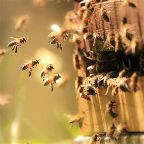 queen bee dies sciencing