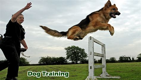 Best Online Dog Training Programs. Supply Chain Management Pdf Mn State Patrol. American Medical Billing Association. Dental Implants For Less Payroll Tax Software. Government Contracting Solutions. Online Wedding Planning Courses. Cleaning Service Raleigh Porsche 911 Modified. 4 Year Colleges In Alabama Outsourcing In Hr. Microsoft Two Factor Authentication