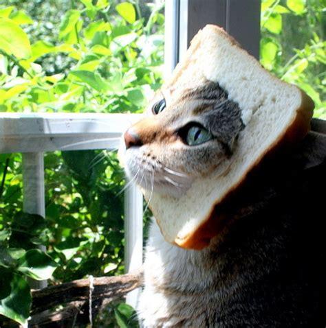 bread cat  tumblr