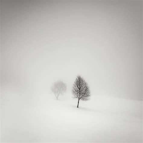 trees  fog  par pierre pellegrini photographie