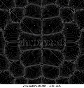 Tortoise-shell Stock Photos, Images, & Pictures | Shutterstock