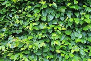 Quels Arbustes Pour Une Haie : choisir une haie de bambou comme brise vue le paysagiste ~ Premium-room.com Idées de Décoration