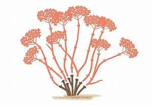 Kirschbaum Richtig Schneiden : die besten 25 kirschbaum schneiden ideen auf pinterest pflanzkalender s ulenobst schneiden ~ Frokenaadalensverden.com Haus und Dekorationen