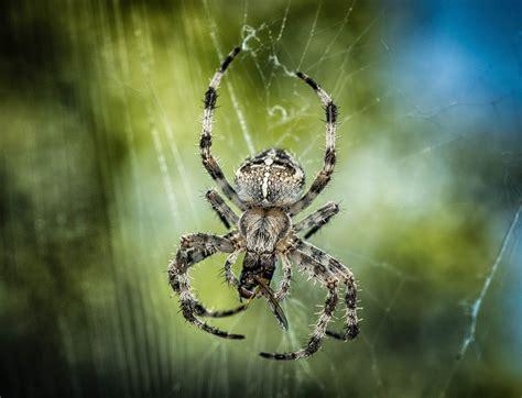Harga Jaring Serangga gambar alam hewan serangga menyeberang dekat makan