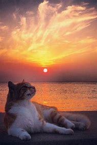 Cat Beautiful Sunset