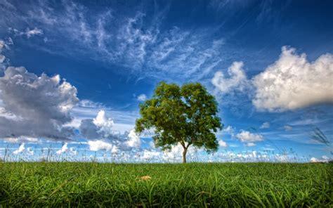 Blue Tree Wallpaper by Meadow Tree Blue Sky Clouds Wallpapers Meadow Tree Blue