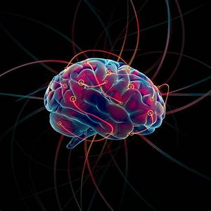 Music And The Brain  Effects Of Music On The Brain